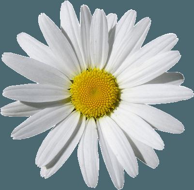ramos de flores sencillos amor sevilla
